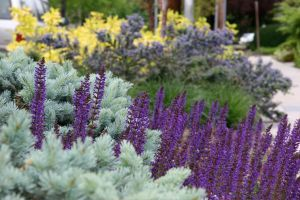 Waves of striking foliage look great year round, while flowers add seasonal color.